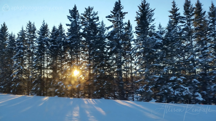 Winter sunset through trees at Riding Mountain National Park, Manitoba