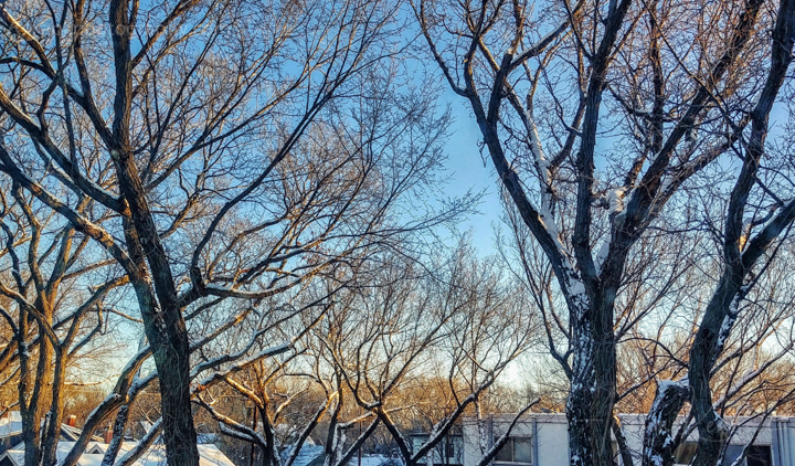 Late afternoon light in tree branches on a cold winter day