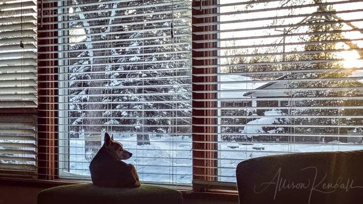 Dog watching a winter sunset