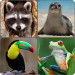 Download Animals Memory Game 2.0 APK For Android