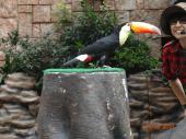 Big-Beak bird