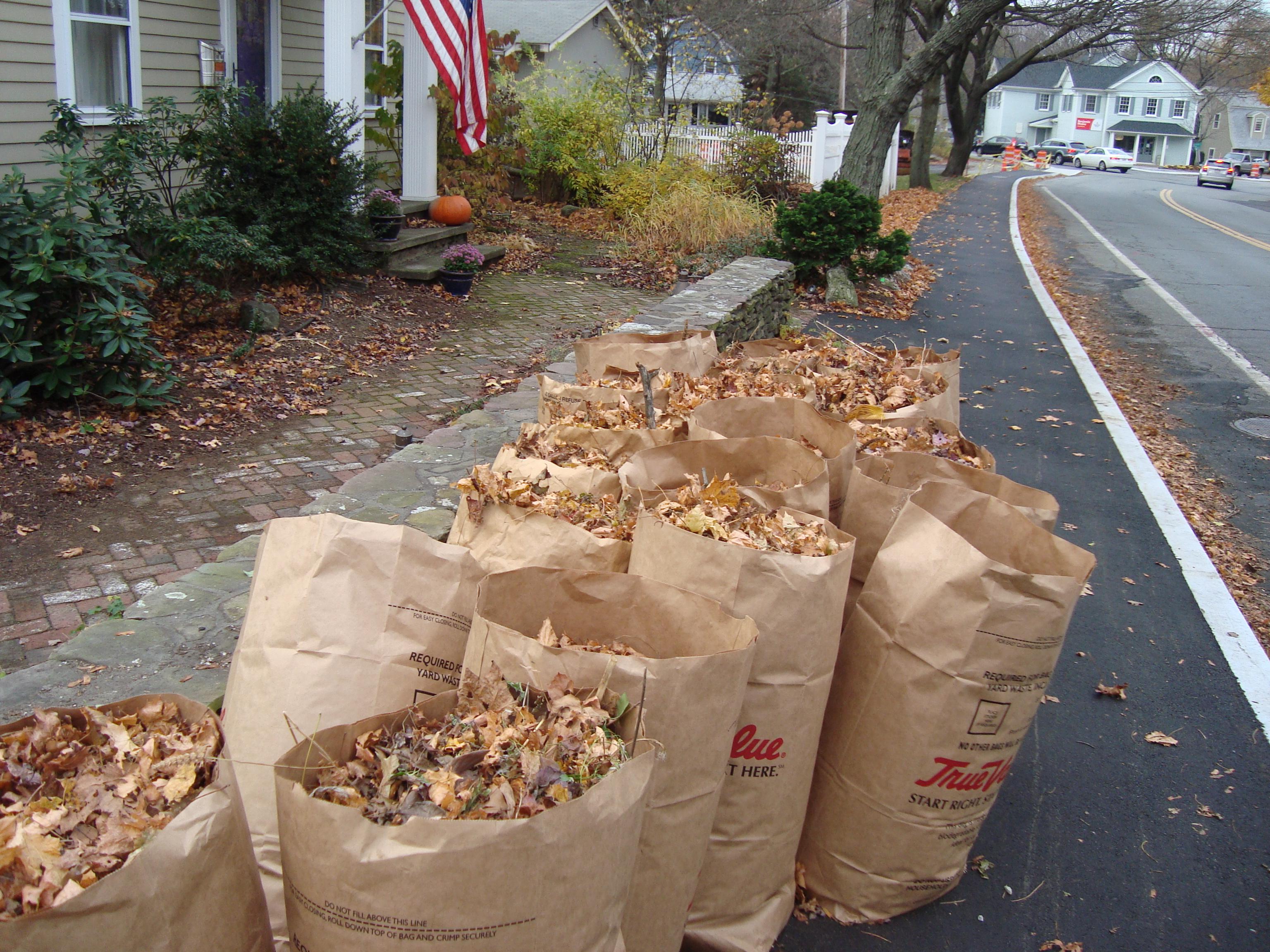 21 Bags of Leaves