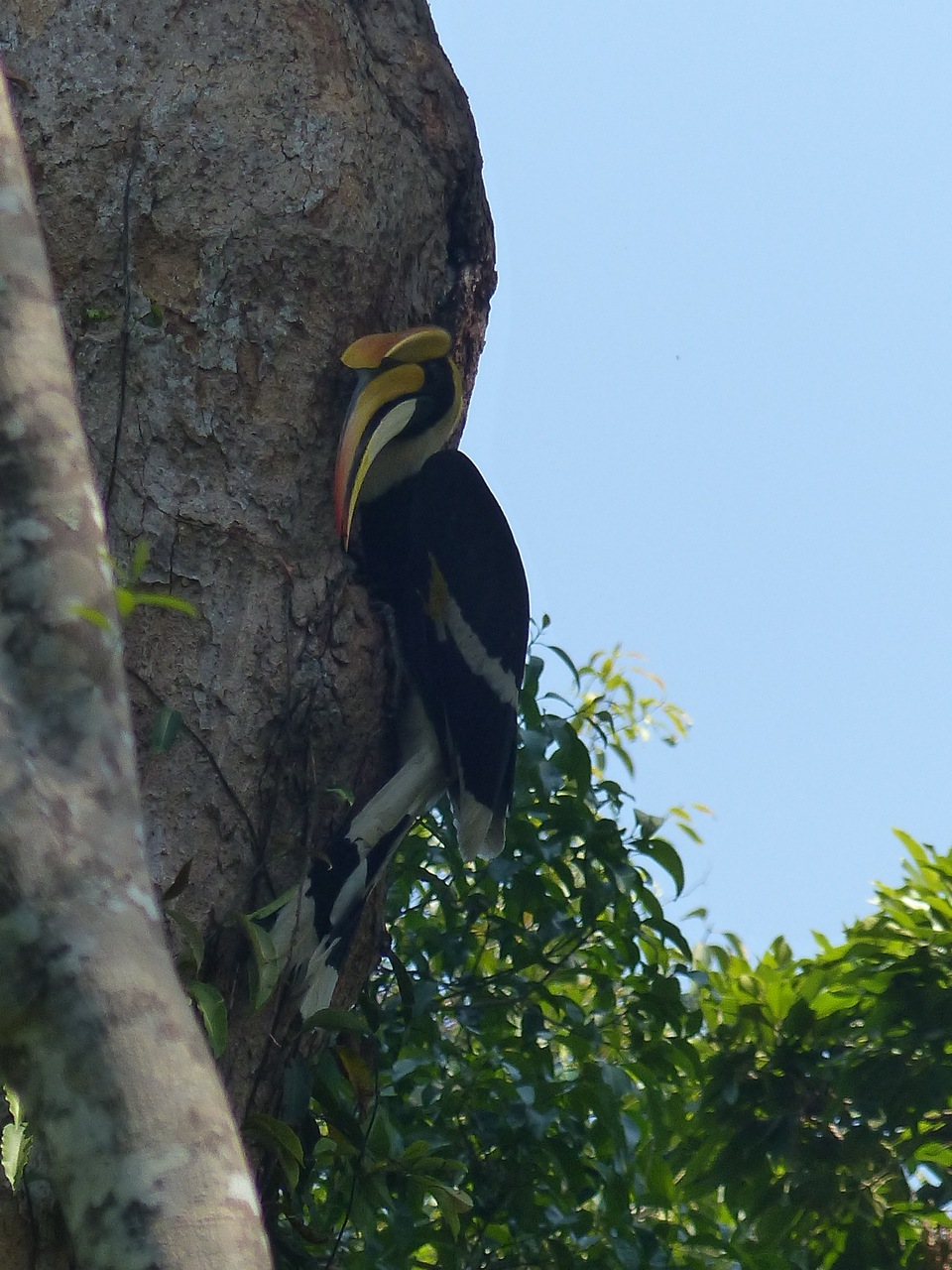 oiseau-khao-yay