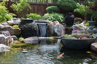 backyard pond example
