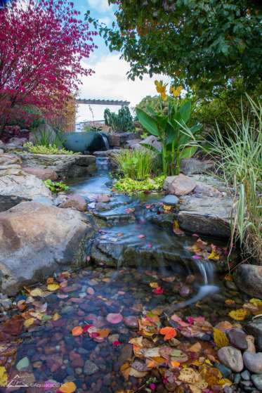 backyard water feature example