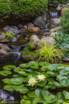 outdoor water pond example