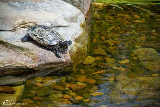 Turtle_01
