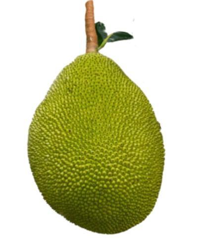 Jackfruit-Kathal