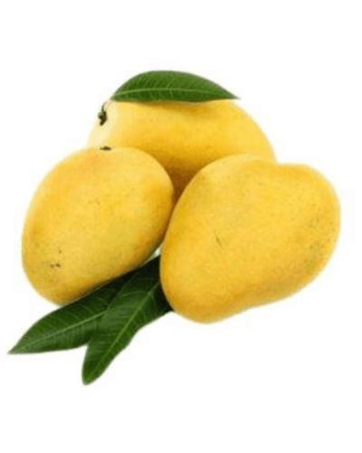 ApnaSabji-mango-Safeda