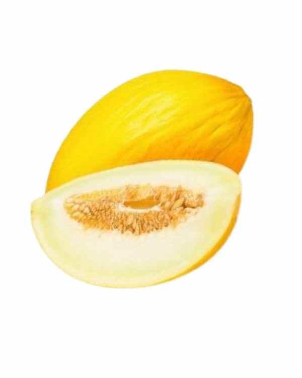 Sarda-Melon