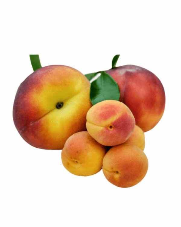 Apricot-ApnaSabji