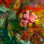 Sponges and corals