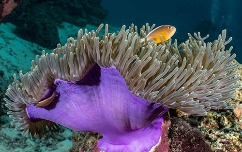Anemone Reef