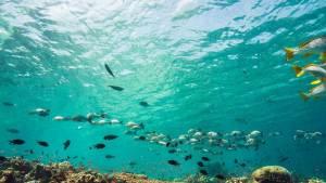 Fish Indentification Diver