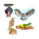 Krafttier – Fledermaus, Falke, Eidächse, Eule