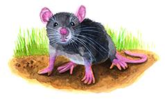 Entdecke dein Krafttier - Maus