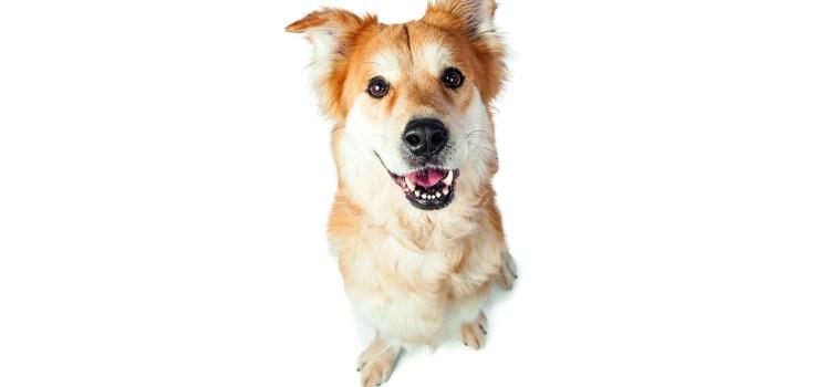 Wundernasen auf vier Pfoten - Hund