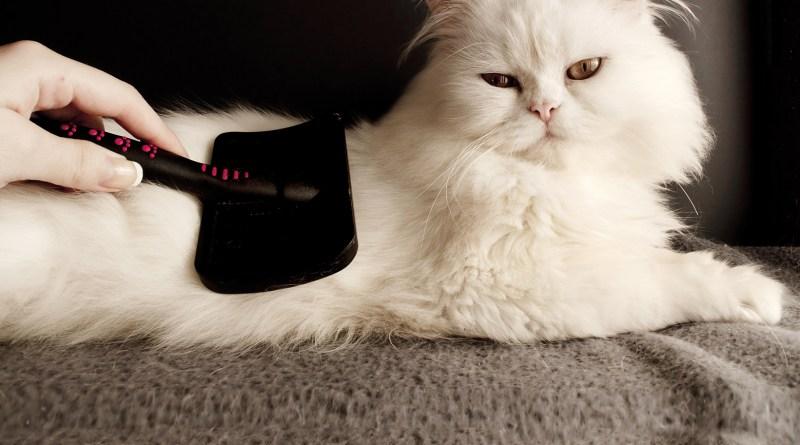 Fellwechsel: Stress und Belastung für das Haustier