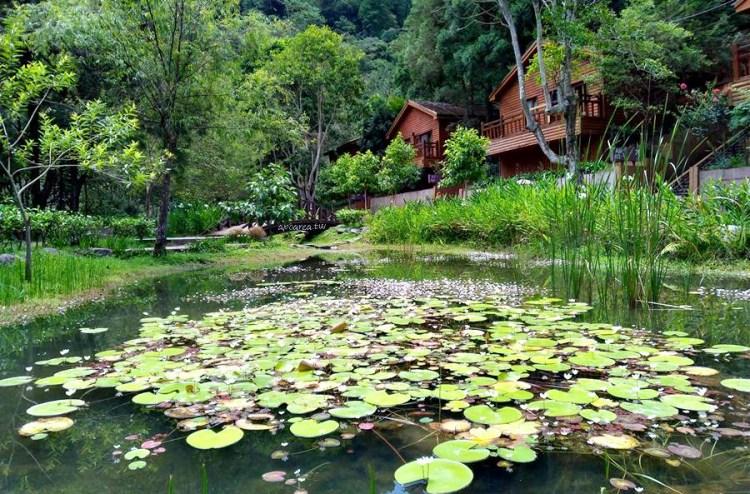 全民適用林務局觀光局旅遊優惠,12森林遊樂區年底前擇一免費入園1次,未滿19歲青少年兒童暑假不限次數免費暢遊22間主題樂園