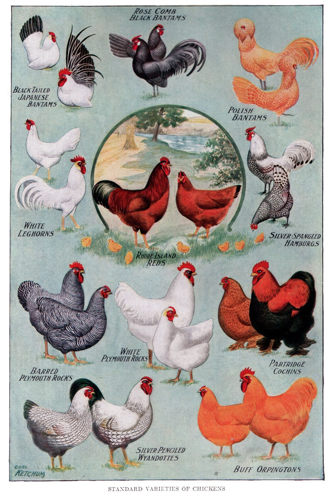 7 Chickens And Roosters Farm Animals