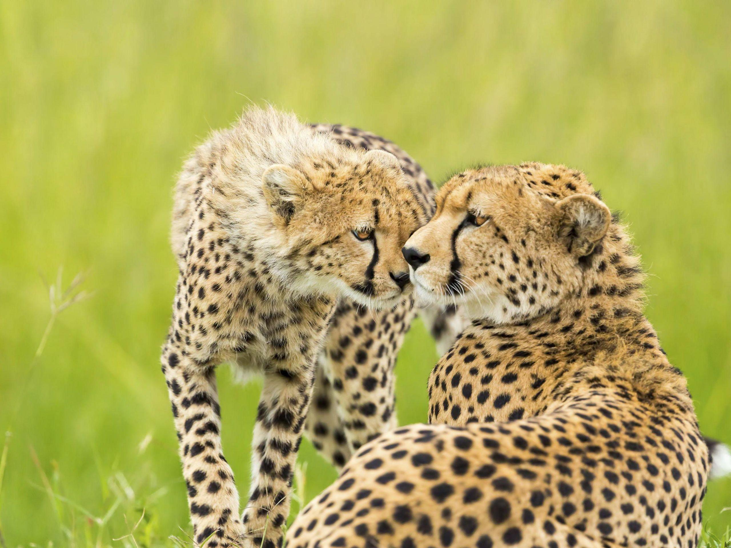 6 Describing Animals Worksheets For Kids