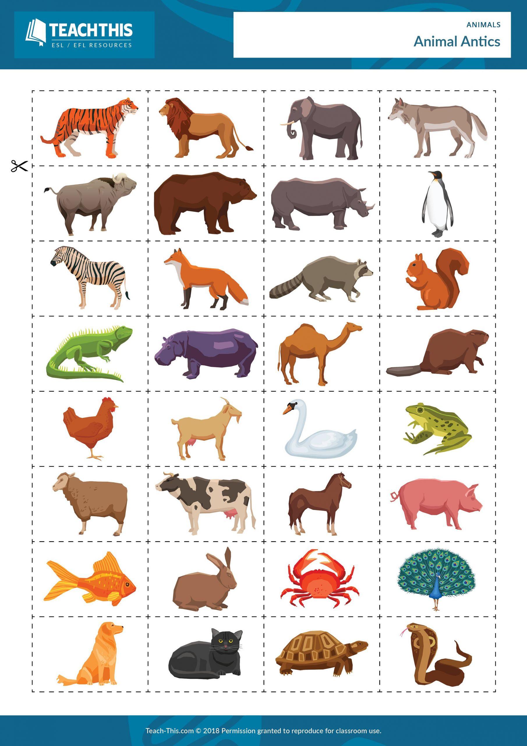 5 Farm Animals Activities First Grade