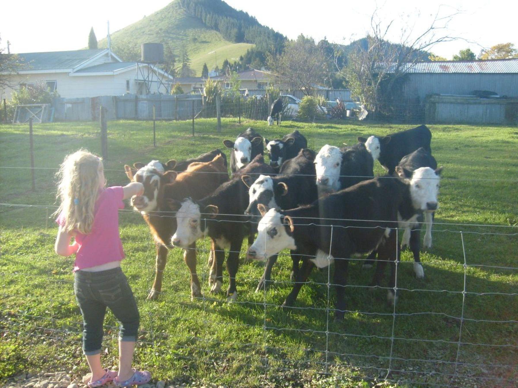 6 Farm Animals Activities