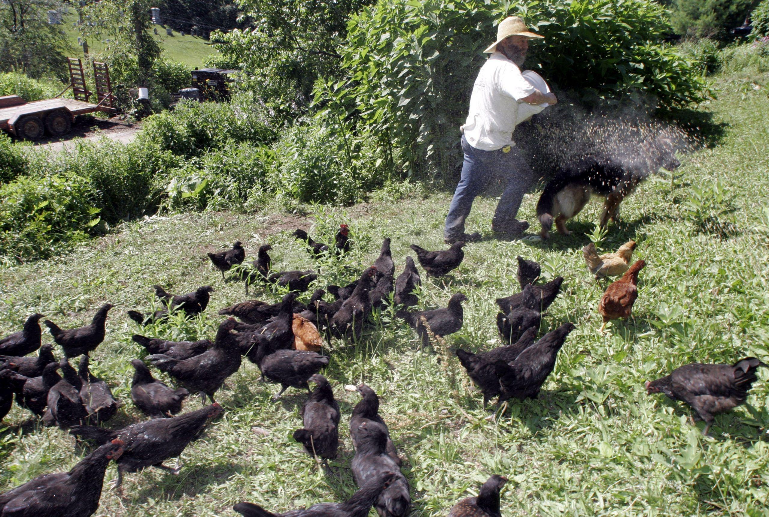 5 Farm Animals Country Life