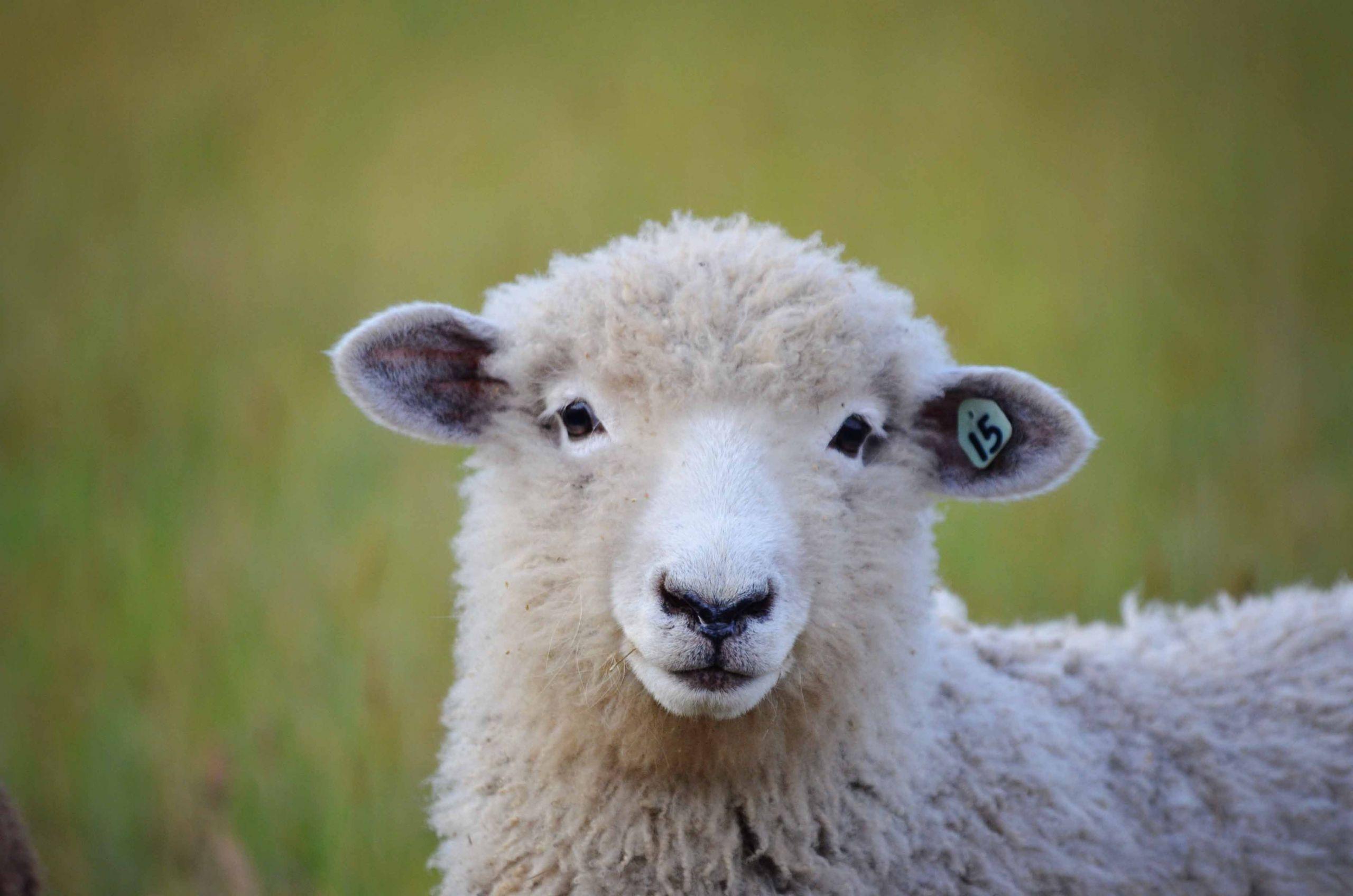 7 Farm Animals For Beginners