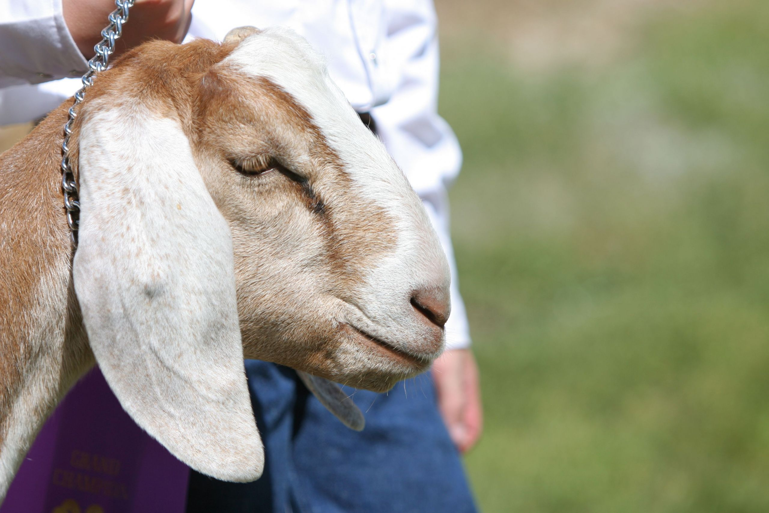 5 Farm Animals Nursery Painting