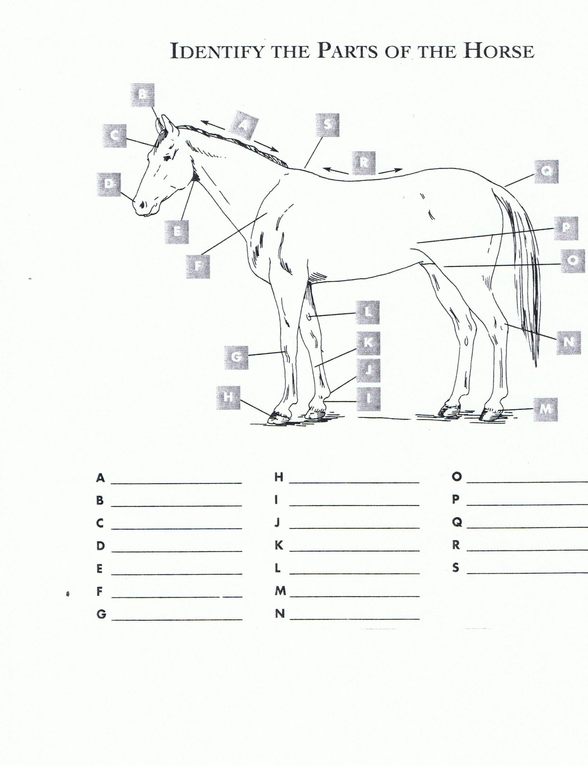 6 Farm Animals Worksheets Student