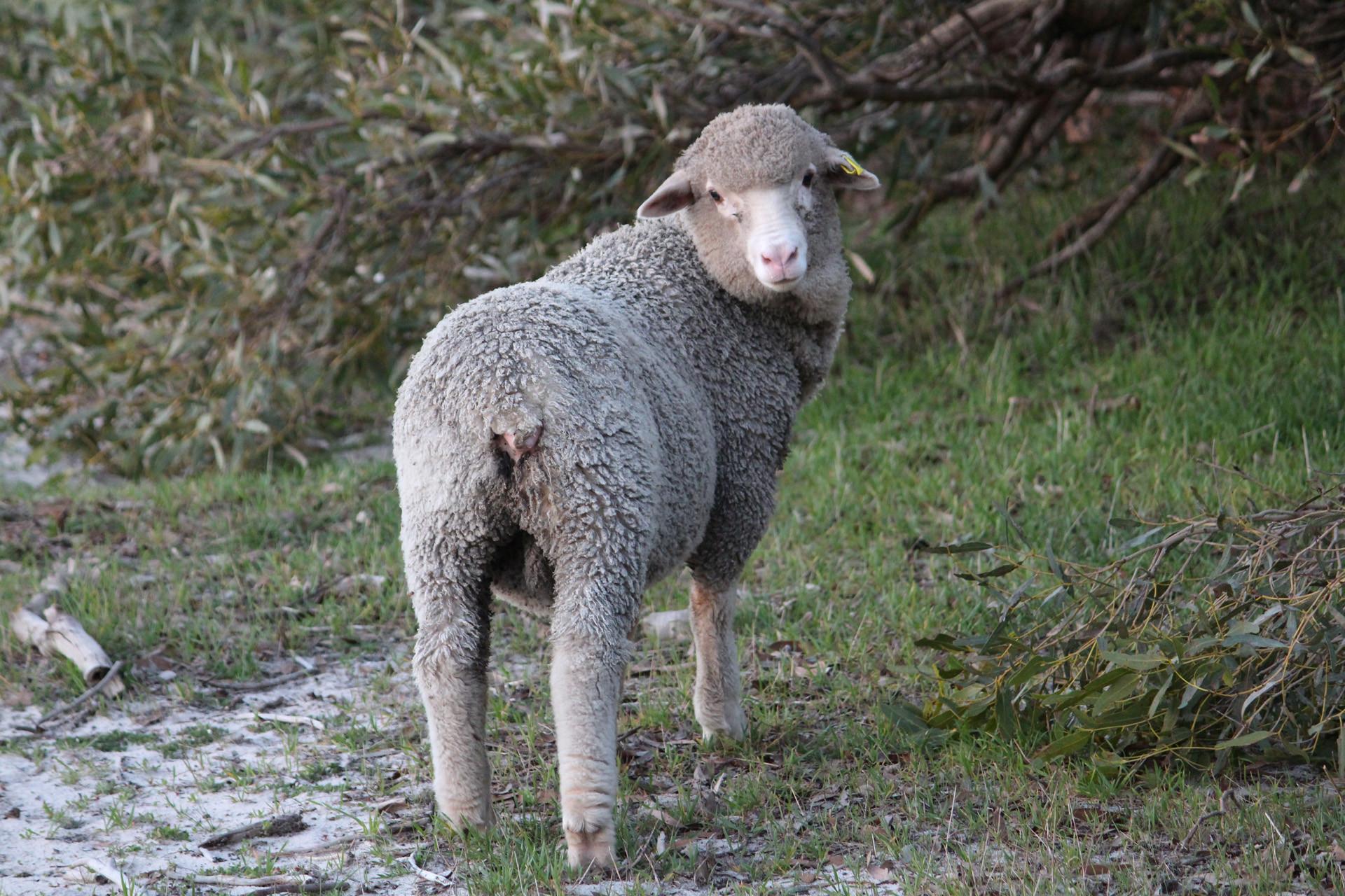 6 Raising Farm Animals Livestock