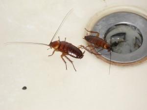 Απολυμανσεις Ηλιουπολη - κατσαρίδες