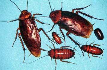 Απολυμανσεις Ελληνικο - κατσαρίδες