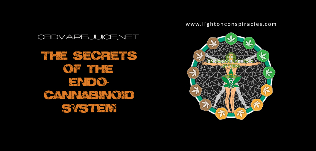 The secrets of the endocannabinoid system   Light On Conspiracies – Revealing the Agenda