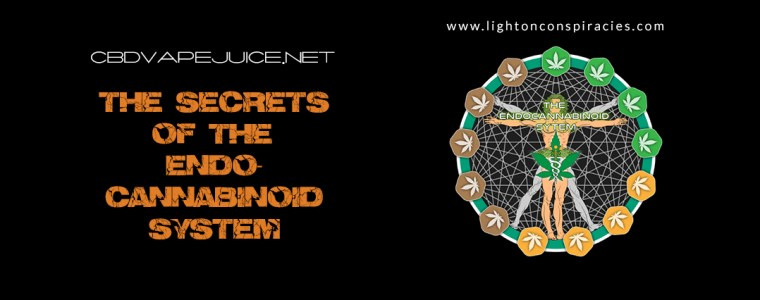 The secrets of the endocannabinoid system | Light On Conspiracies – Revealing the Agenda