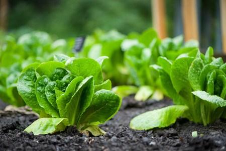 Permacultuur in je moestuin of De tuinier die niets meer doet –
