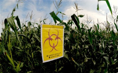 The Illegal Entry of GMOs into India | Asia-Pacific Research