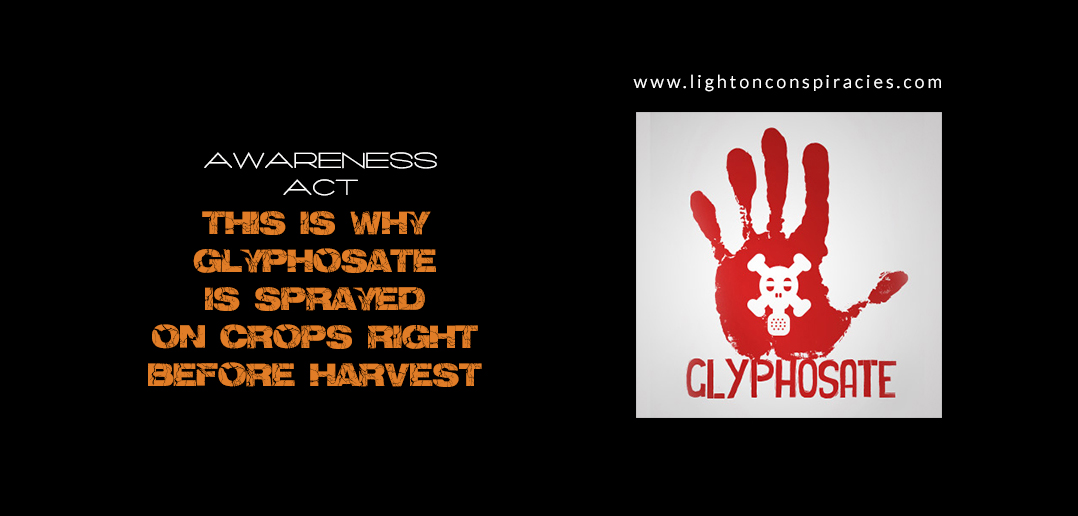 This Is Why Glyphosate Is Sprayed On Crops Right Before Harvest | Light On Conspiracies – Revealing the Agenda