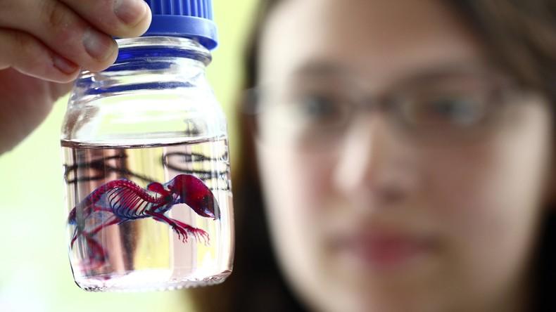 Nachwuchs von zwei Müttern: Wissenschaftler zeugen gesunde Mäusebabies von Nagerweibchen