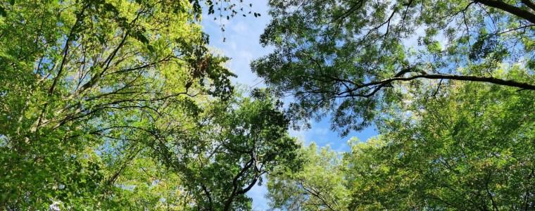 Große Bäume atmen tiefer