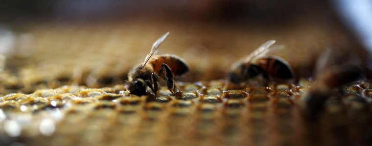 Dow AgroSciences Seeks to Expand Use of Bee-killing Pesticide to Additional 3 Million Acres in California, Texas, Arkansas and Louisiana – Global Research