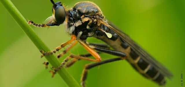 Insects Are Vanishing at an Alarming Rate, New Study Finds