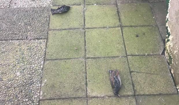 5g-in-actie-mussen-vallen-dood-van-t-dak.