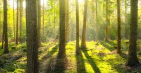 het-klimaatbos-komt-er-in-willebroek-kortrijk-ecuador-en-oeganda