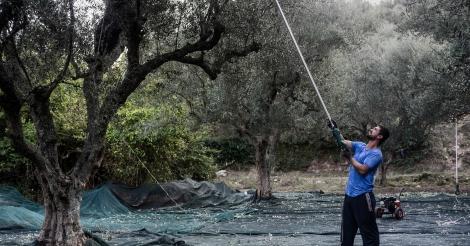 griekse-olijfolie-mythische-uitweg-uit-de-crisis