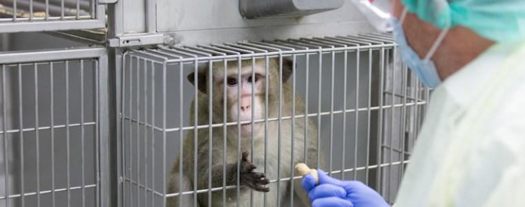 traurige-bilanz-rund-28-millionen-tiere-bei-tierversuchen-benutzt-oder-getotet