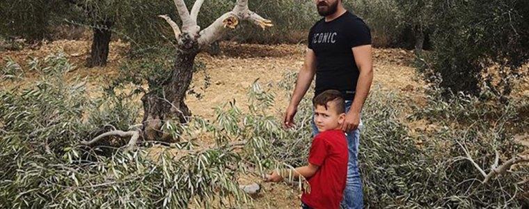 palestijns-geweld-tegen-israels-kolonisten-verzet-of-terreur-8211-the-rights-forum