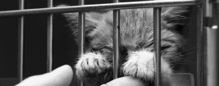 congress-must-stop-usda8217s-animal-experiments-says-whistleblower