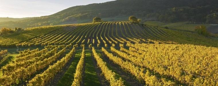 osterreich-weltweit-spitze-bei-okologischer-landwirtschaft